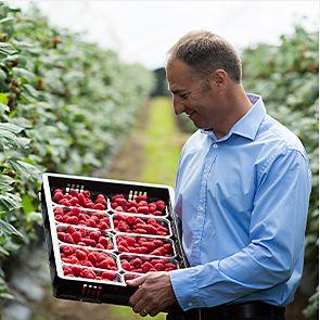 Harry Hall with fresh raspberries on his farm