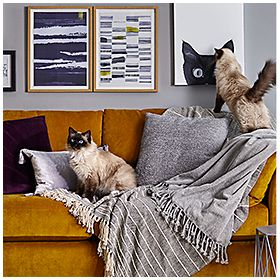 Cat on velvet sofa with cushions and throws