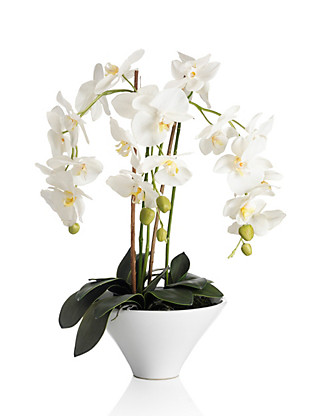 Large White Orchid in Pot Home