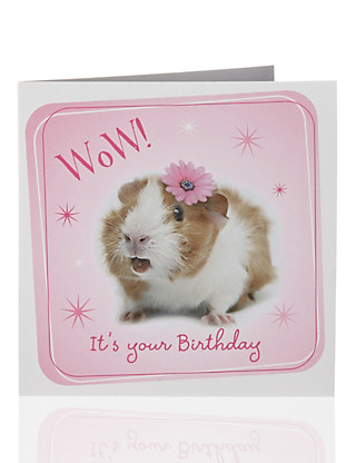 Value Photographic Guinea Pig Kids Birthday Card Home