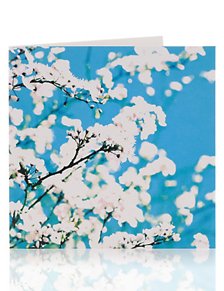 Apple Blossom Blank Greetings Card Home
