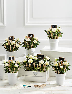 Celebration Table Plan - Ivory
