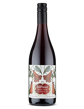 Bellflower Pinot Noir - Case of 6