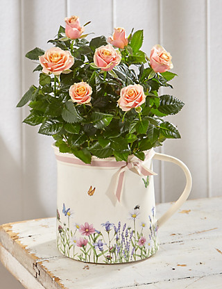 Rose Jug Flowers