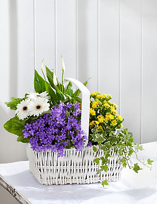 Large Flowering Basket Flowers