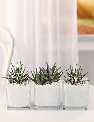 Succulent Glass Trio Flowers
