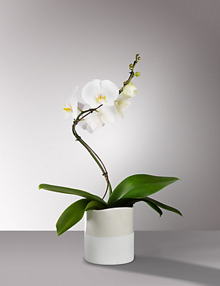 Autograph™ Spiral Orchid Flowers