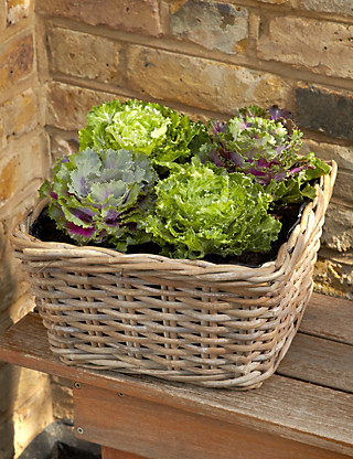 Ornamental Autumn Cabbage Basket Flowers