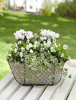 Pure Patio Basket Flowers