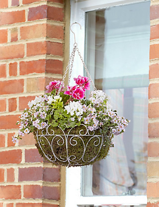 Victoriana Cascading Hanging Basket Flowers