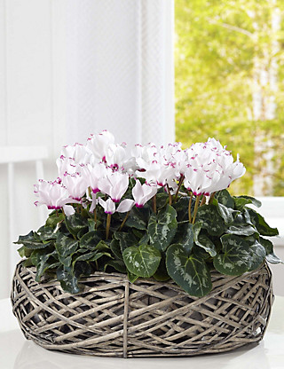 Contemporary Basket Flowers