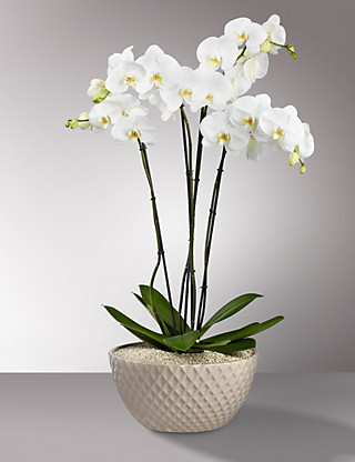 Autograph™ Ultimate Orchid Bowl Flowers