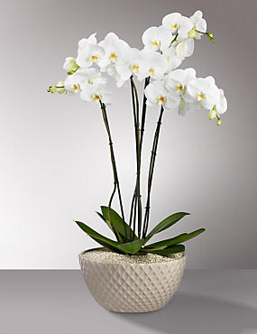 Autograph™ Ultimate Orchid Bowl
