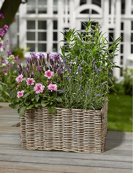 Bee and Butterfly Flowering Basket