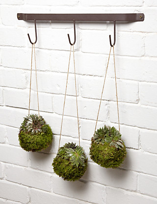 Hanging Moss Trio Flowers