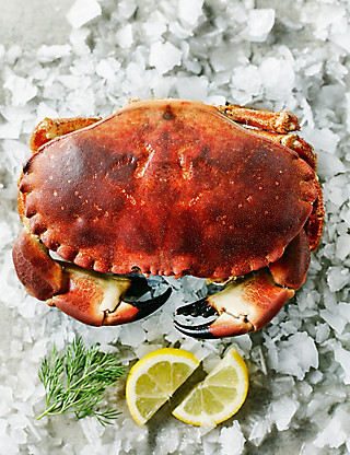 A Whole Orkney Crab Food
