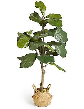 Large Fiddle Leaf Fig Tree, , catlanding
