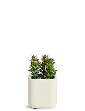 Small Garden Plant in Ceramic Pot, , catlanding
