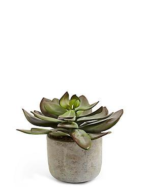 Echeveria in Ceramic Pot, , catlanding