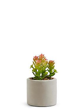 Small Succulent Garden Pot, , catlanding