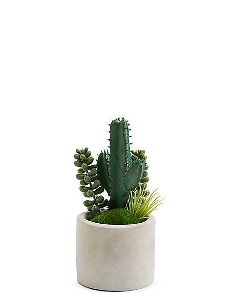 Small Cactus Pot   M&S