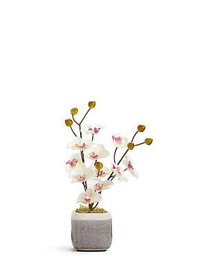 Mini Orchid in Crackle Pot, , catlanding