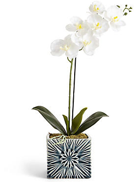 Orchid in Geo Pot