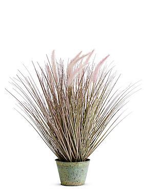 Foxtail Grass, PURPLE MIX, catlanding