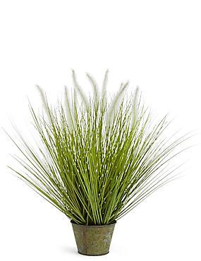 Foxtail Grass, GREEN MIX, catlanding