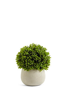 Topiary in Ceramic Pot