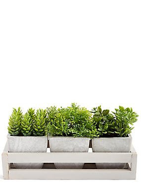 Grass Trio in Wooden Tray