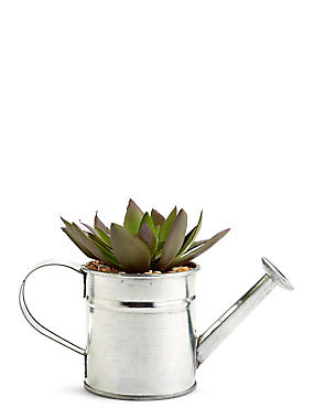 Succulent in Watering Can