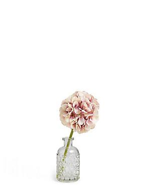 Allium in Vase, LILAC MIX, catlanding