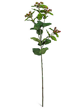 Hypericum Berry Stem