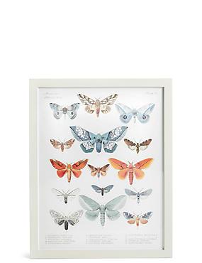 American Lepidoptera Wall Art, , catlanding