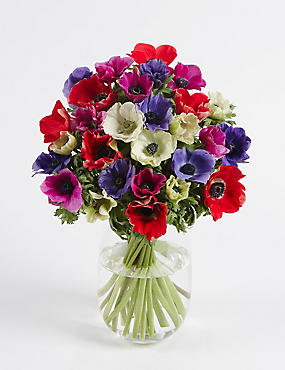 Flowers Plants Online Next Day Flower Delivery Ms
