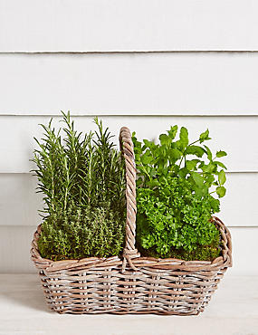 Summer Herb Wooden Planter