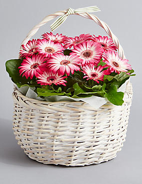 Summer Gerbera Planter