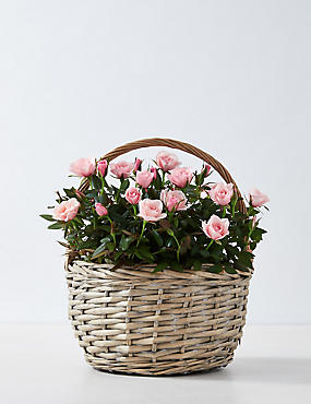 Scented Rose Bowl