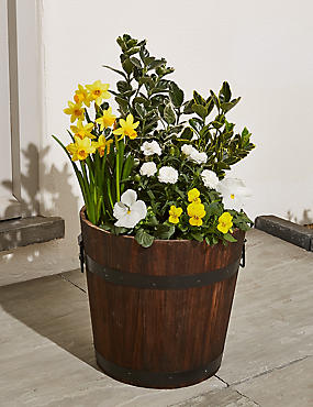 Extra Large Spring Flowering Barrel