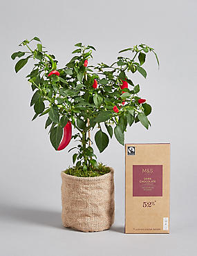 Letterbox Chilli Plant & Dark Chocolate & Chilli