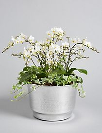 Collection Luxury Orchid Planter (Pre-Order: Available from 3rd May 2018)