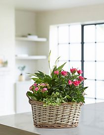 Summer Flowering Basket (Pre-Order: Available from 3rd May 2018)