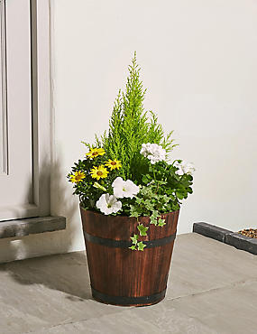 Extra Large Summer Flowering Barrel
