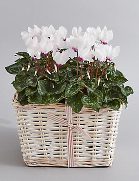 Classic Contemporary Planter