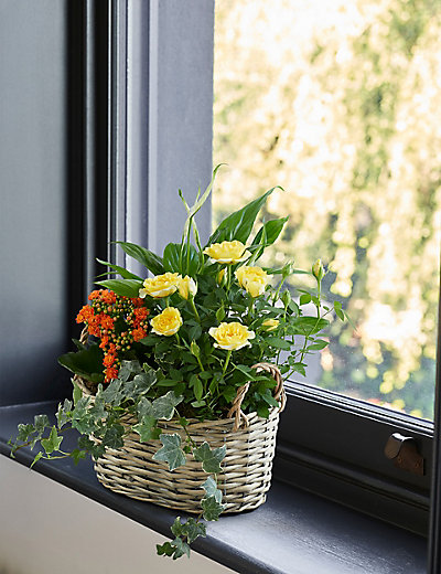 Classic flowering basket m s for Classic house plants