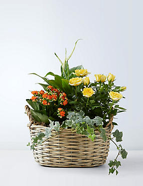 Mixed Planted Willow Basket