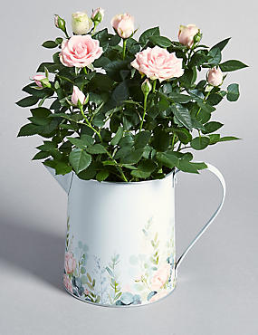 Rose Jug with Chocolates