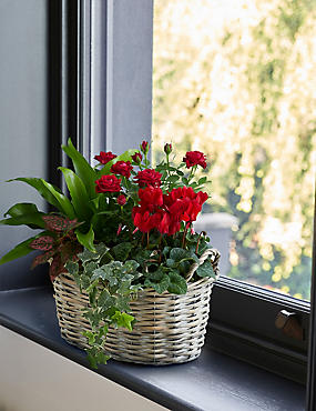 Large Classic Flowering Basket