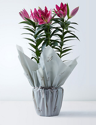 Gift-Wrapped Oriental Lily Flowers